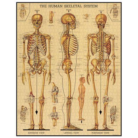 Cavallini Puzzle Skeletal System 1000-teilig