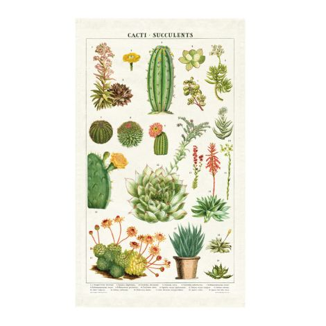 Cavallini Geschirrtuch Succulents