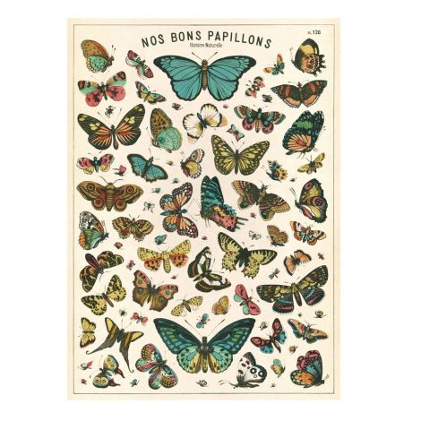 Cavallini Poster Butterfly Chart •