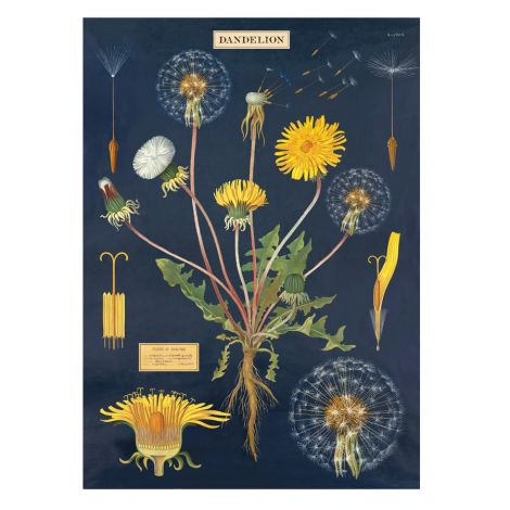 Cavallini Poster Dandelion Chart