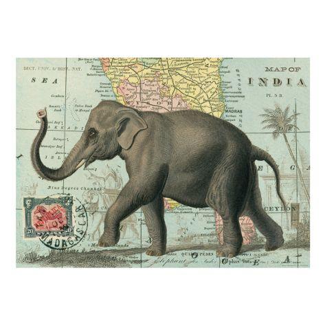Cavallini Poster Elephant •