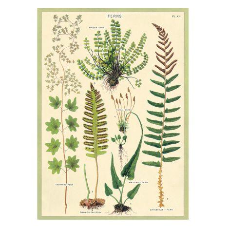 Cavallini Poster Ferns
