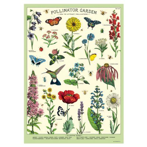 Cavallini Poster Pollinators
