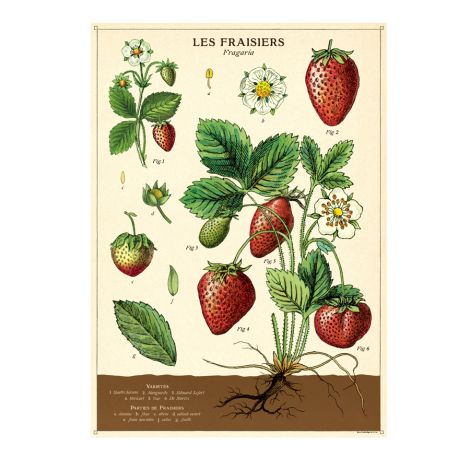 Cavallini Poster Strawberries