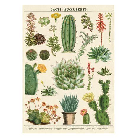 Cavallini Poster Cacti & Succulents