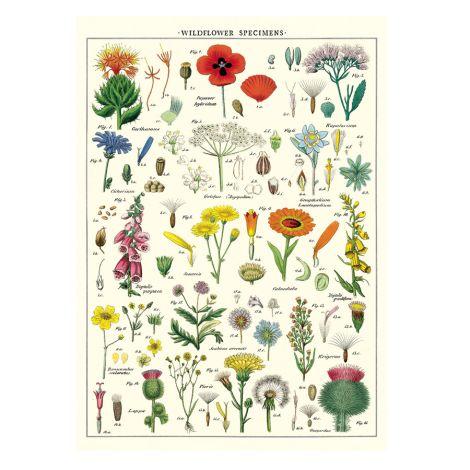Cavallini Poster Wildflowers