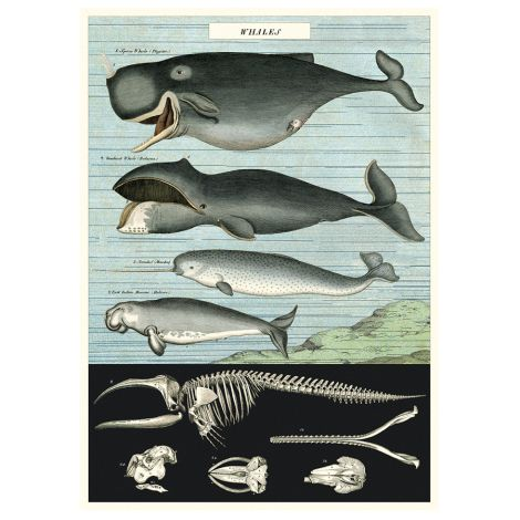 Cavallini Poster Whale Chart •