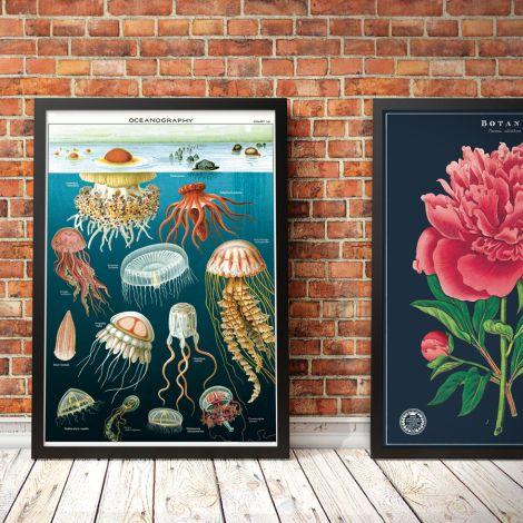 Cavallini Poster Jellyfish