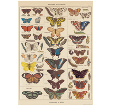 Cavallini Poster Butterflies Natural History