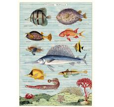 Cavallini Poster Tropical Fish