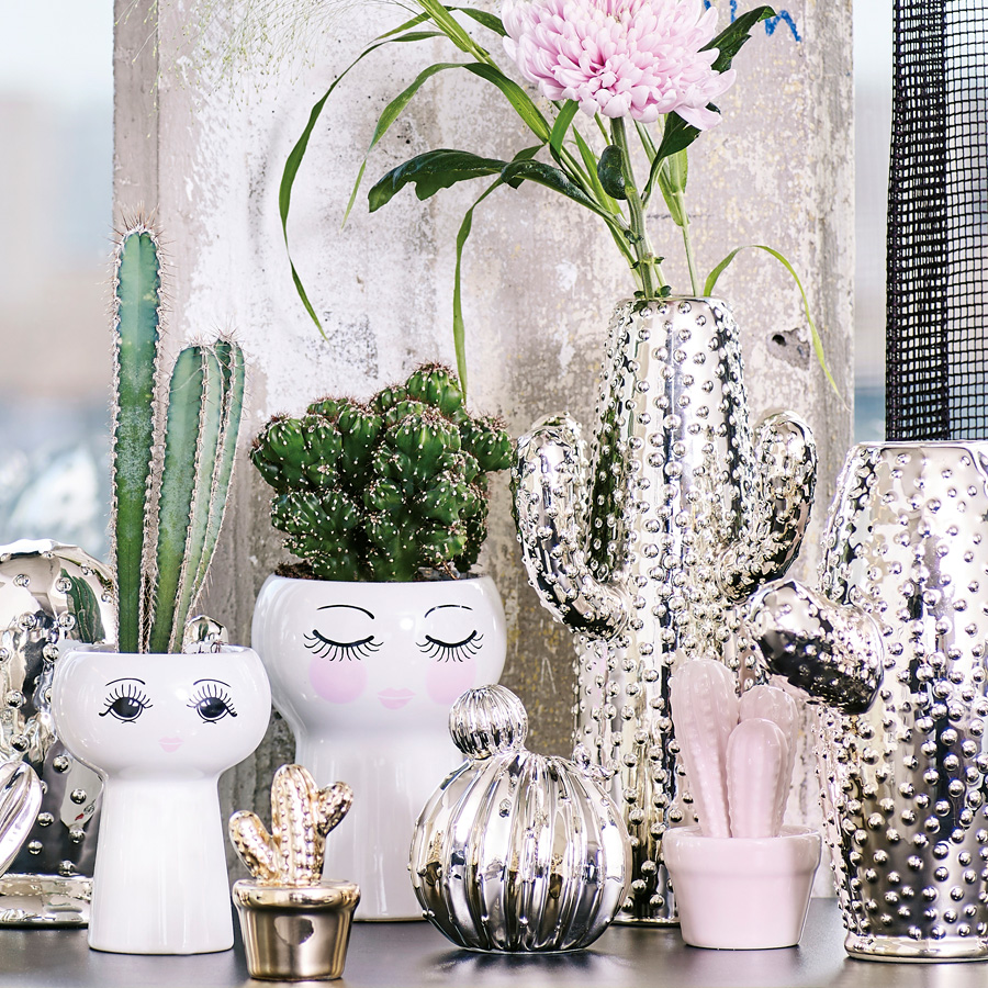 miss toile kaktus im topf rose online kaufen emil paula. Black Bedroom Furniture Sets. Home Design Ideas